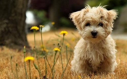 狗狗真菌性皮肤病如何治疗呢?