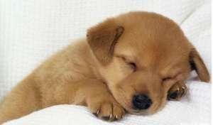 小狗拉稀常用药品有哪些?