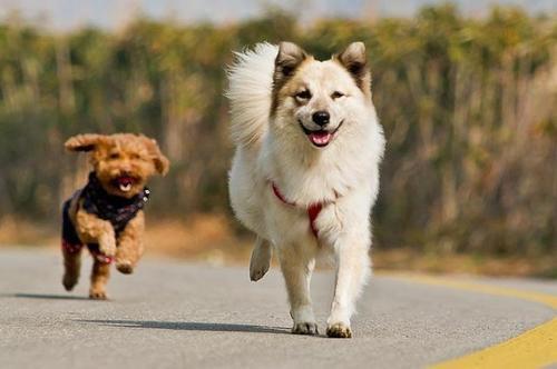 如何禁止狗狗随地捡食?