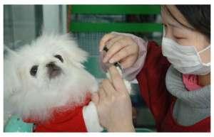 如何训练狗狗不害怕宠物医生?