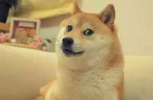 狗狗到底多大才算是成犬?