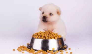 幼犬多久可以喂干狗粮? 喂食幼犬的正确做法!