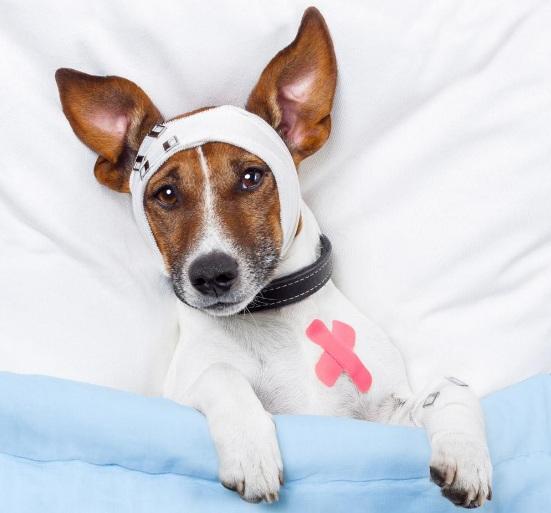 狗狗细小病毒怎么治疗效果最好
