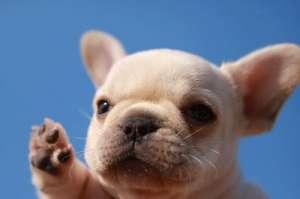 狗狗细小病毒的诊断方法