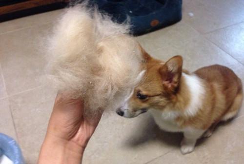 狗狗美毛的食物有什么,什么食物能够给狗狗美毛