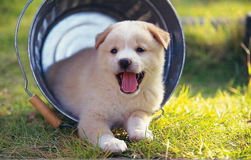 该如何去预防犬瘟热?