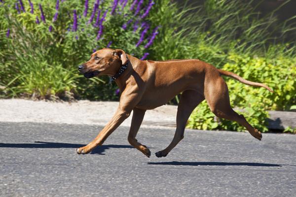 犬瘟热后遗症