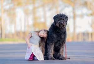 犬瘟热传染人吗?