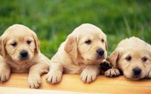 狗狗如果太瘦了该怎么办?