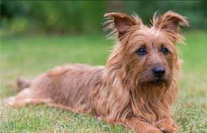 怎么预防犬瘟热?