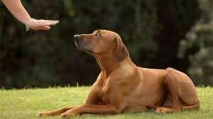 【狗叫的声音】解读狗叫声含义