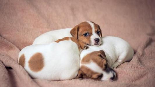 养好狗狗的经验知识, 养狗常识大全集!