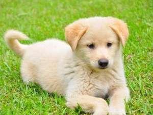 喂食幼犬的正确做法?
