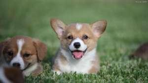 作为一个上班族应该如何养狗?