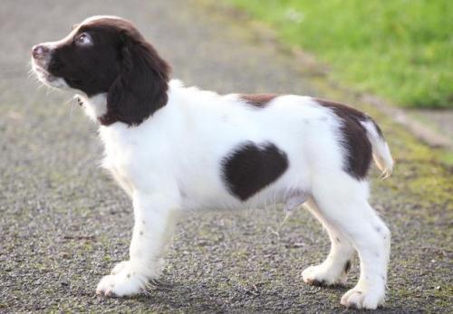 狗狗得了狂犬病的早期症状是什么?