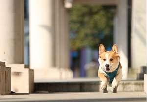狗狗肠胃炎有哪些症状?狗狗患了肠胃炎怎么办?