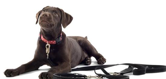 如何挑选一根合适的狗项圈?选狗项圈是一门高深的学问!