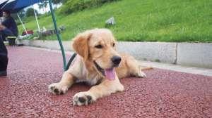 夏季炎热,怎么预防狗狗中暑?
