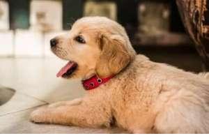为什么在夏天容易得真菌皮肤病? 狗狗真菌皮肤病治疗方法!