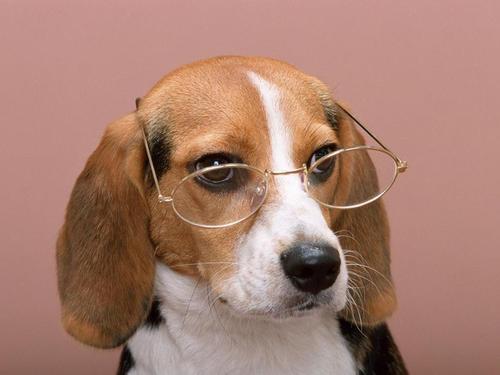 幼犬不吃东西还呕吐怎么办?可以从以下几个方面判断原因!