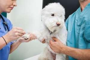 给狗狗打狂犬疫苗,3个注意事项特别注意!