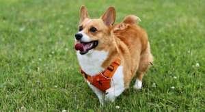 狗狗发生犬口炎的原因有哪些?