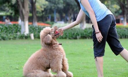 """训练狗狗跟随, 学会这5招""""杀手锏""""让狗狗对你寸步不离!"""