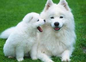 狗狗对狗粮过敏是怎么回事?具体什么症状?