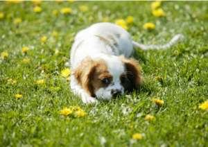 如何纠正狗狗吃土的习惯?