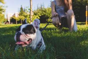在家训练狗狗的5个方法!