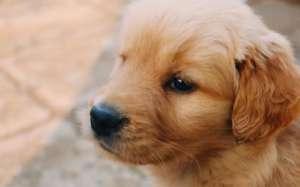 犬瘟热的可怕死亡率