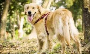 狗狗秋季容易患的5种疾病,预防最重要!