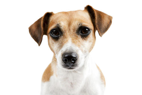 六招就给你一个安静的狗狗