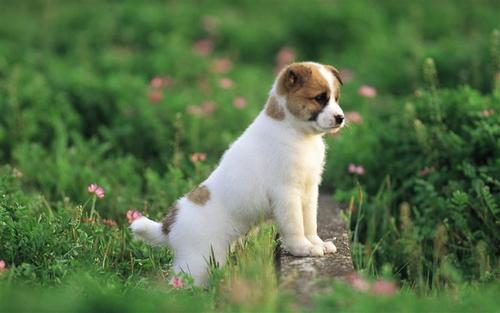 【狗狗取名】狗狗取名方法大公开